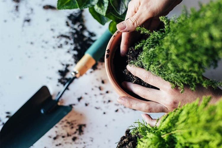 Why Should We Move Our Plants?