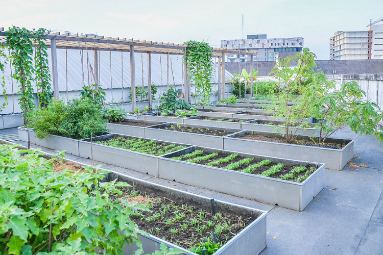 Can Vegetables Grow on a Rooftop?