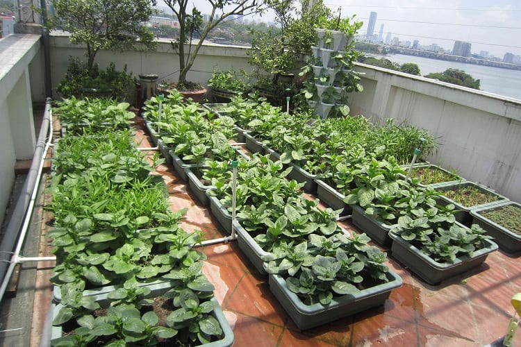 Tips for Optimal Rooftop Vegetable Growth