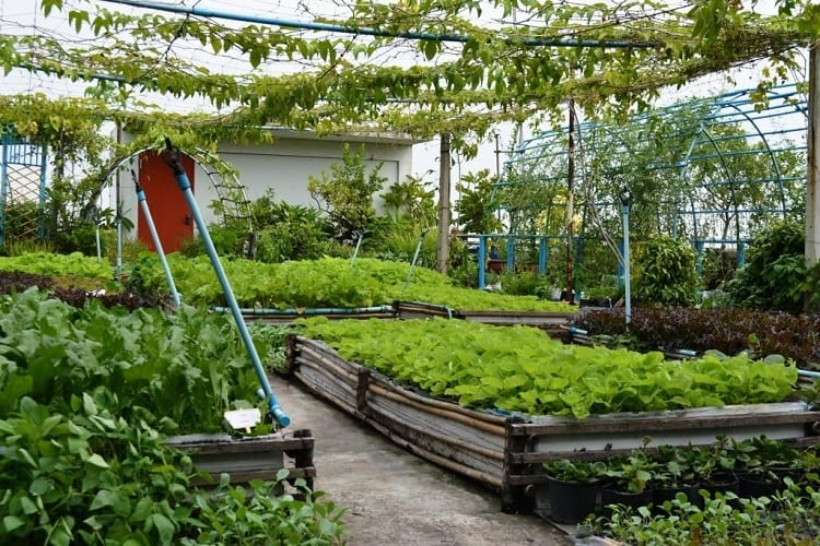 Is It Legal to Have a Rooftop Garden?