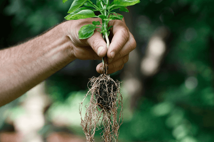 The Role of Roots in Plants