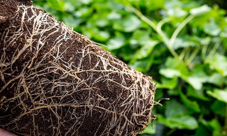 Prevention and Tips for Healthy Roots