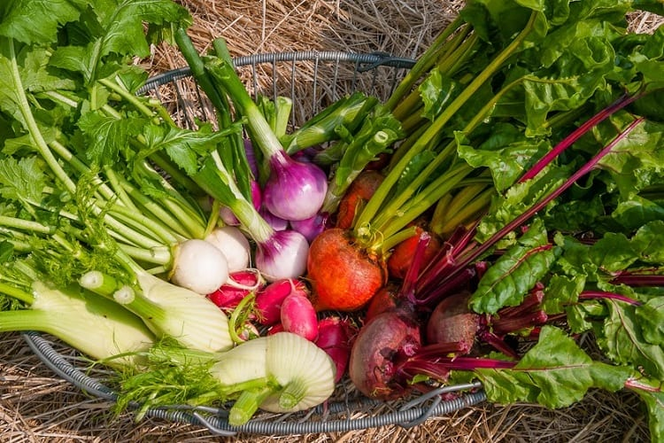 7 Vegetables That Grow in Shade