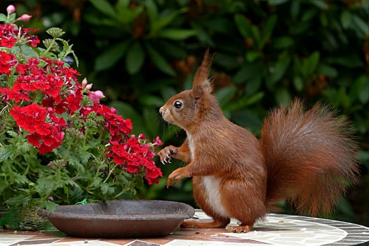 Keeping Plants Free From Furry Friends