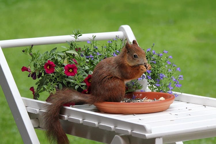 Why Do Squirrels Love Pots?