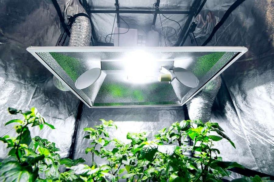 The Best Grow Tent Setup: Indoor Gardening With A Twist