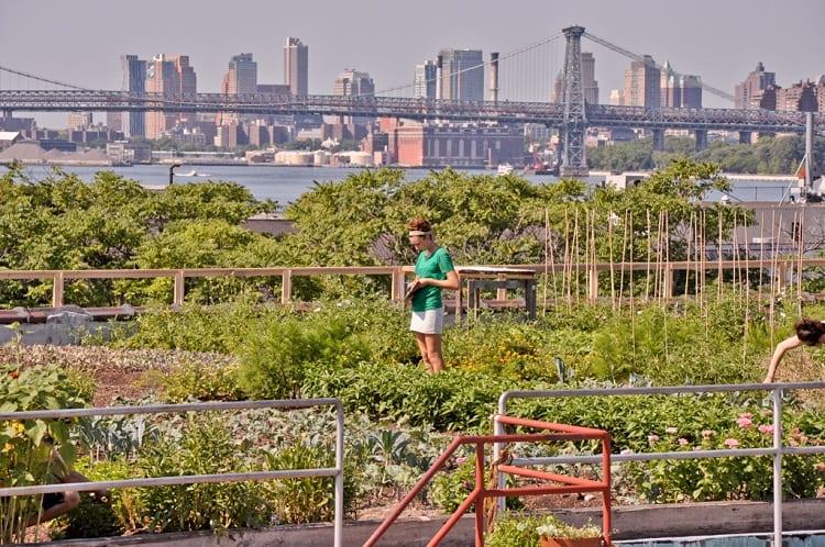 The History of Urban Gardening