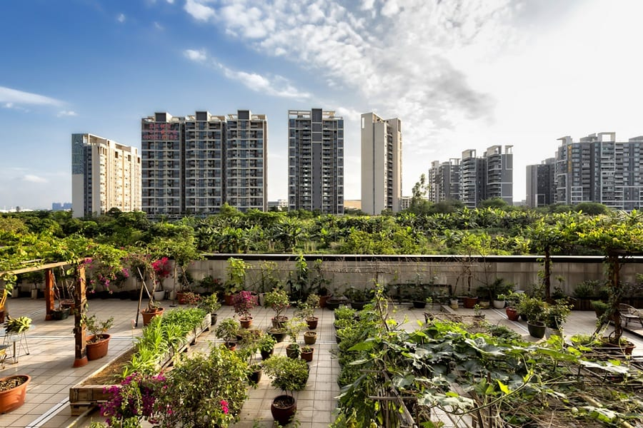 Urban Gardening – Ultimate Guide For 2021