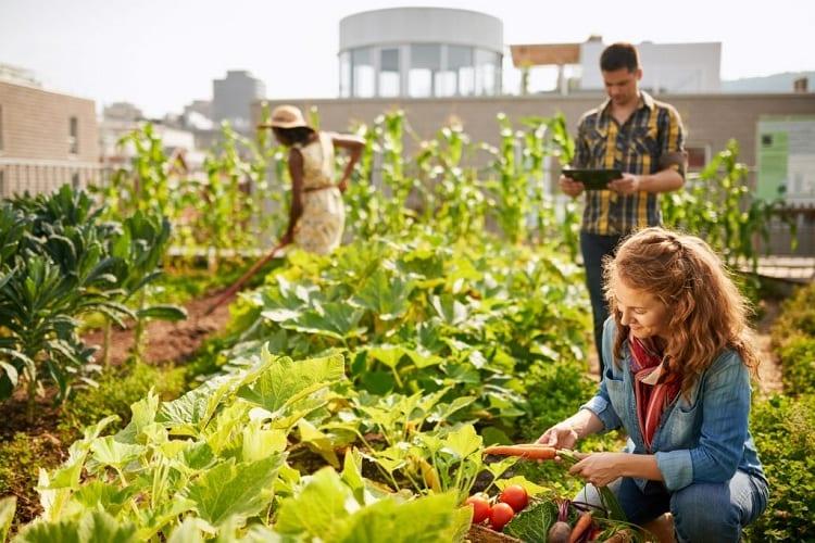 The Types of Urban Gardens