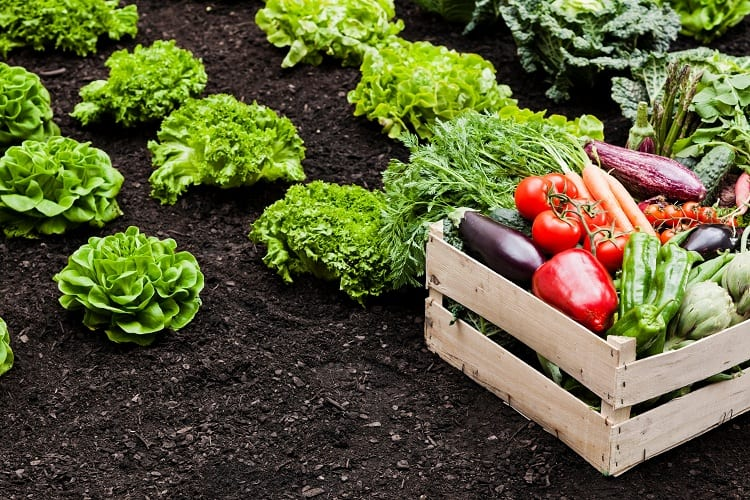 Planned Success for Your Veggie Garden