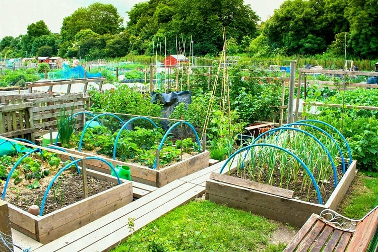 The Right Drainage for Vegetables