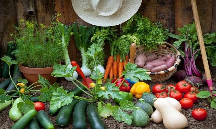Tips for Shade Loving Vegetables