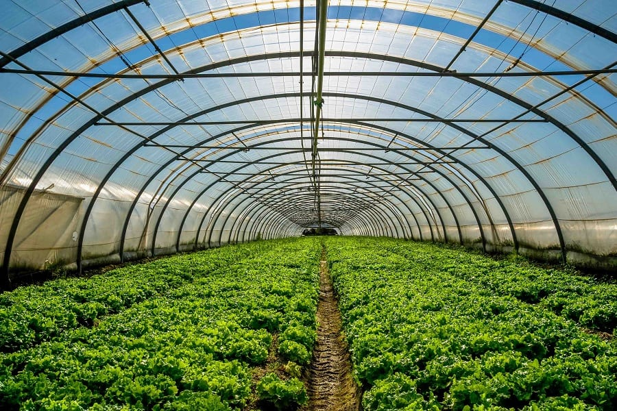 Best Greenhouse Vegetables To Make The Most Of Your Space