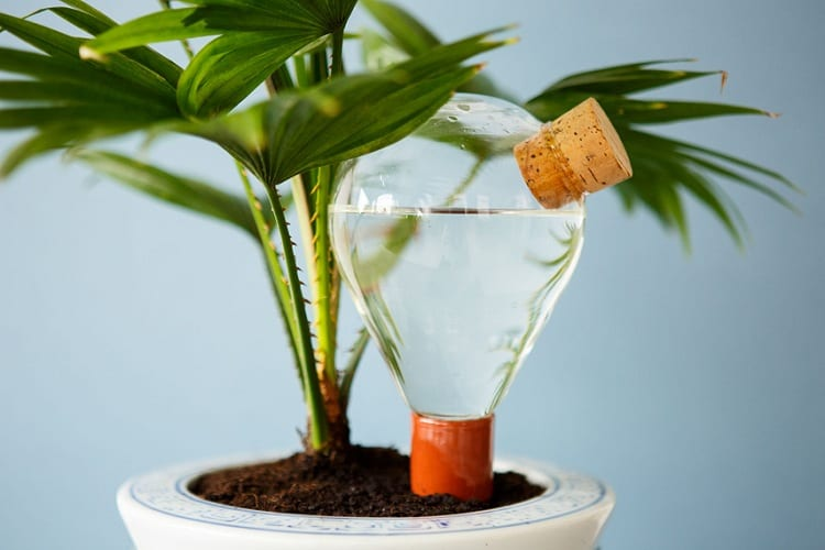 Methods for Watering Plants While You're Away