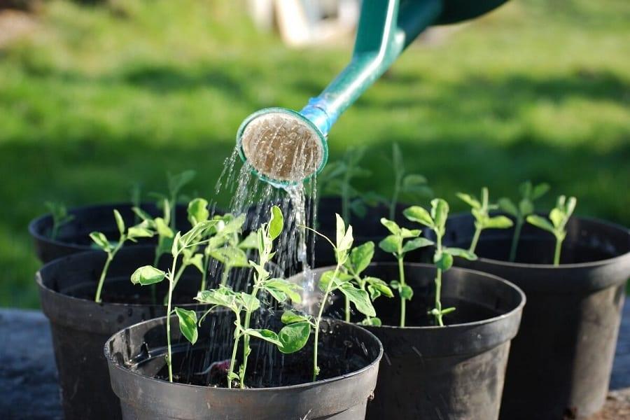 The Best Watering Schedule For Your Veggie Garden