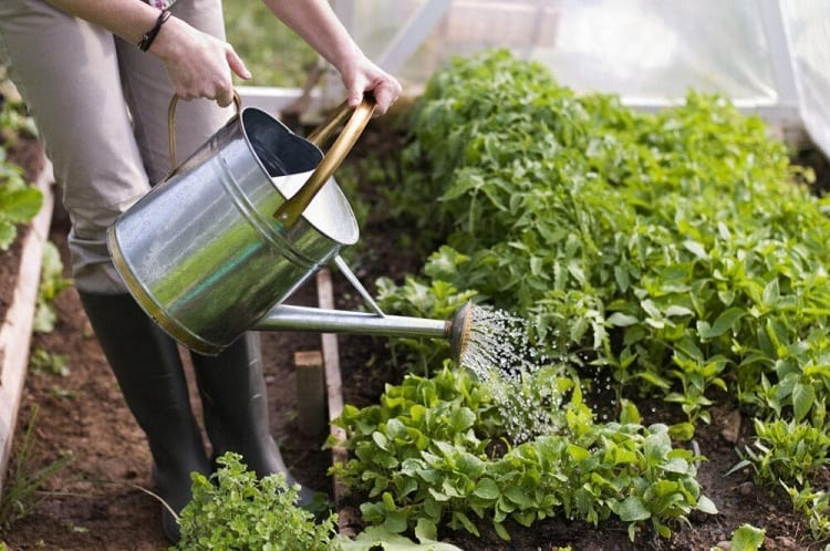 Why Do Vegetables Need Water?