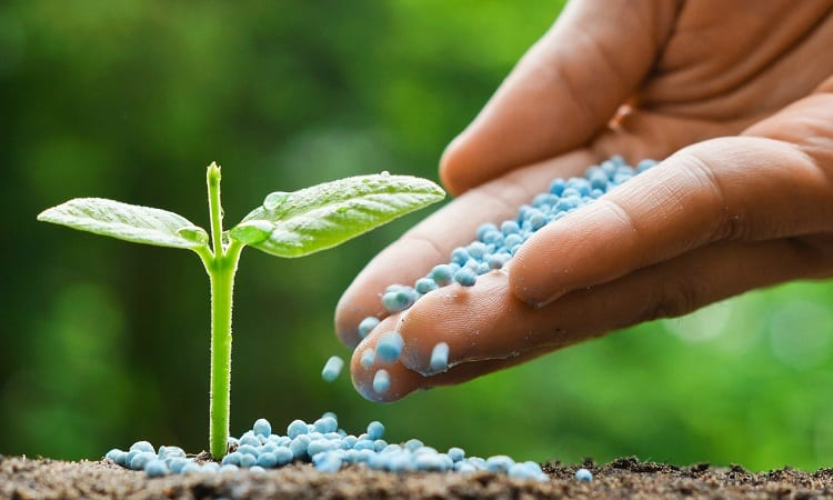 Correct Timing of Fertilizer Application