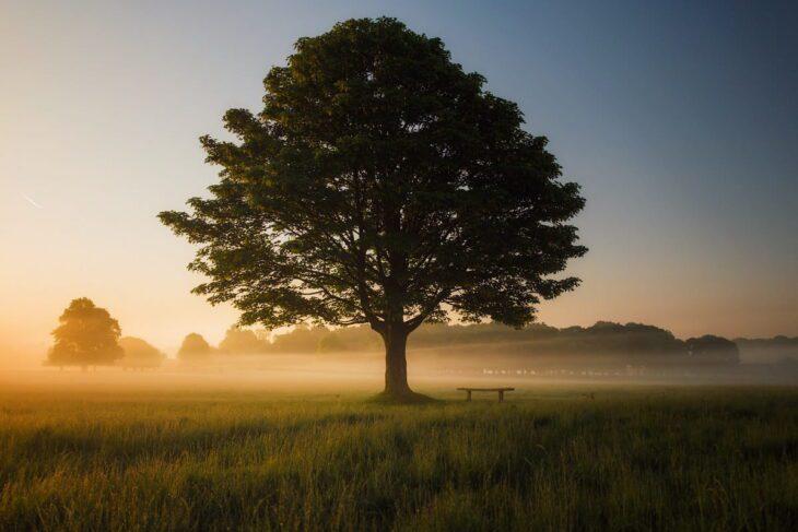 Mustard Tree Facts